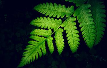 Banner_Green leaf_376x240.png